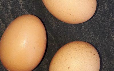 Eggs & cholesterol – should I eat them?